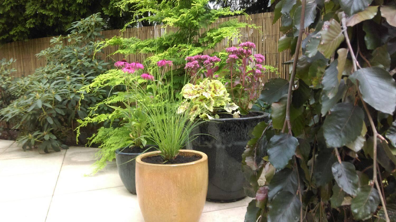 rośliny w donicach