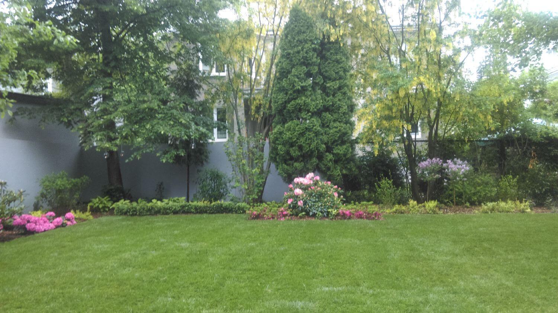 wypielęgnowany trawnik
