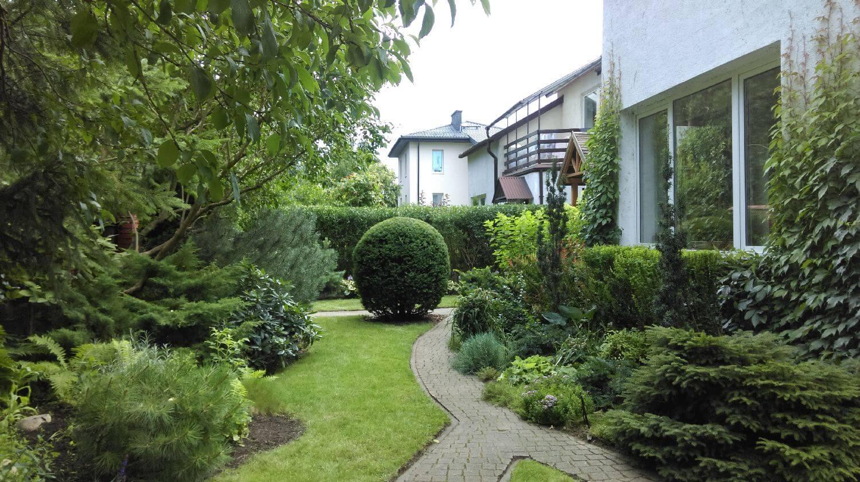 rośliny przy domu