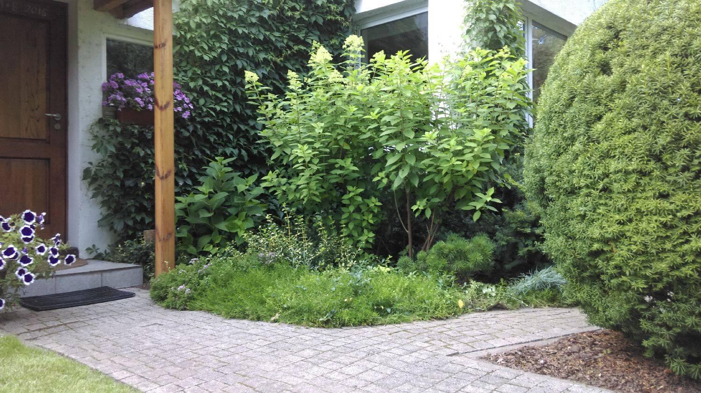 rośliny przed domem