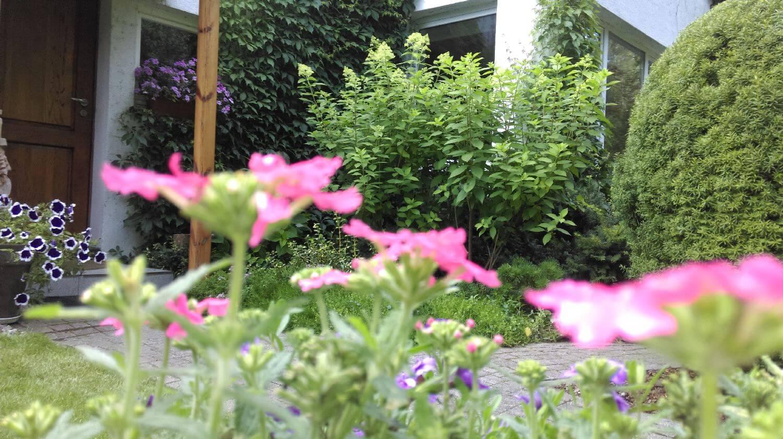 rośliny w ogrodzie