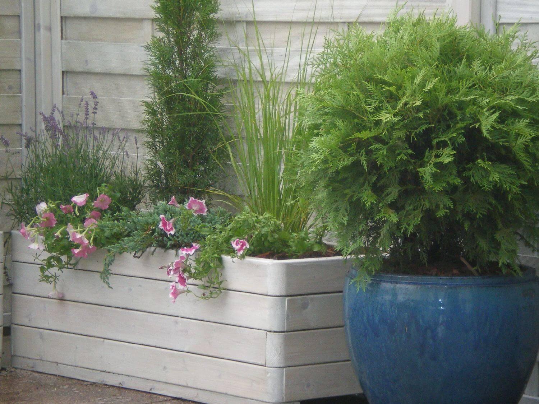 donice z roślinami